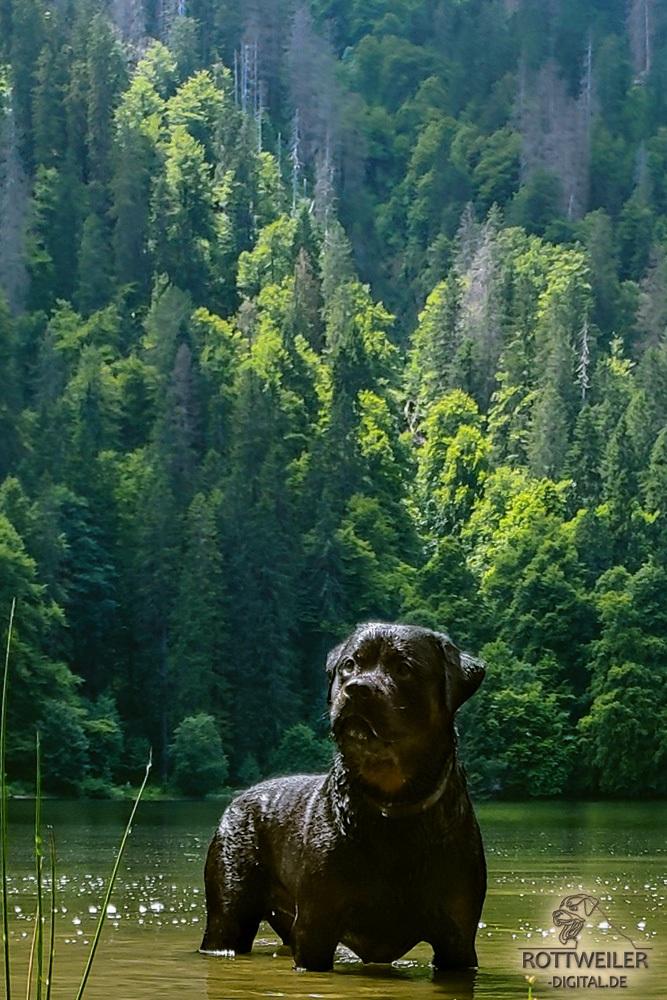 Hochschwarzwald, Feldberg Juli 2021   Krash vom Cherniy Kumir