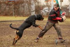 Schutzdienst Training, Rottweiler Krash vom Cherniy Kumir 9 Monate alt mit Frank Wettenmann